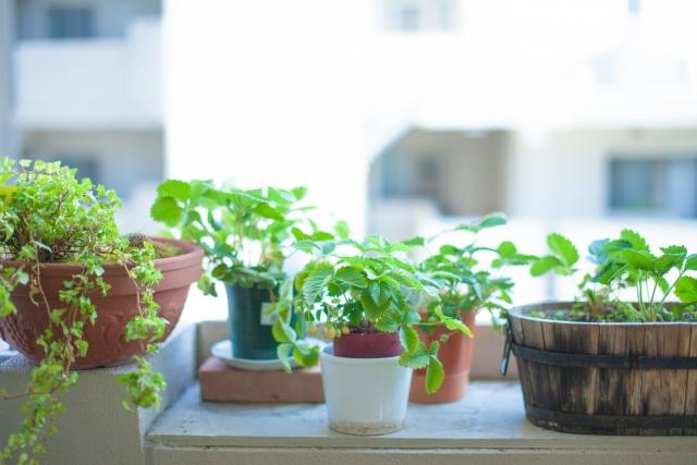 鉢植え,ガーデニング,ベランダ,庭