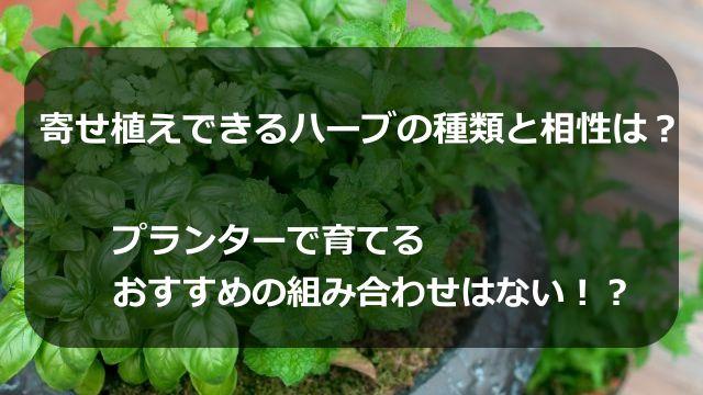 寄せ植えできるハーブの種類と相性は?プランターで育てるおすすめの組み合わせはない!?