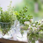 ミントの水挿しは室内栽培できる?根が出ない・枯れる理由と失敗しがちな水挿しのポイントとは?