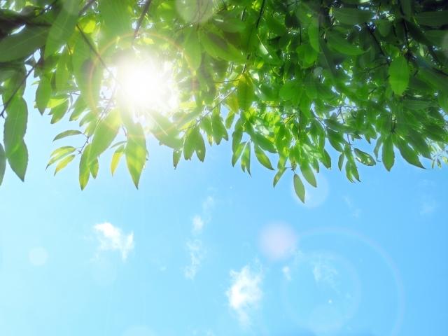 太陽,日当たり