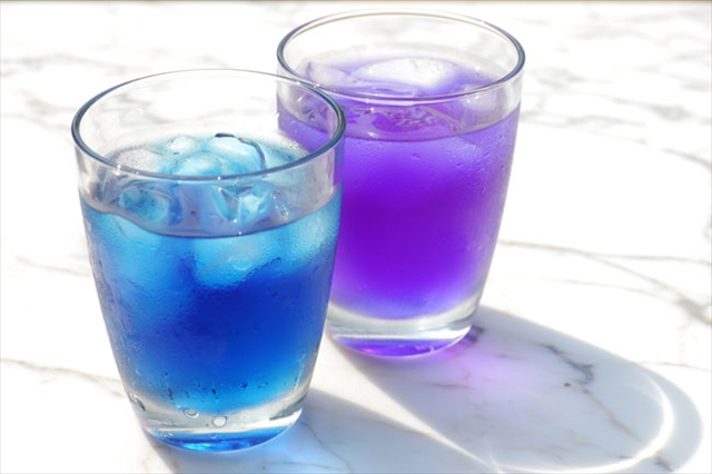 バタフライピー,青い花,ドリンク