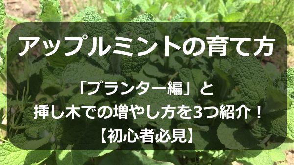 アップルミントの育て方「プランター編」と挿し木での増やし方を3つ紹介!【初心者必見】