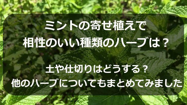 ミントの寄せ植えで相性のいい種類のハーブは?土や仕切りはどうする?他のハーブについてもまとめてみました