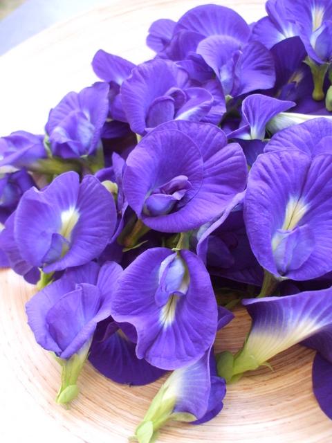 バタフライピー,青い花
