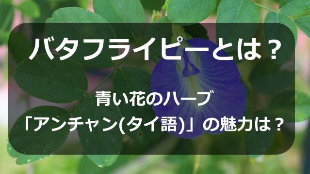 バタフライピーとは?青い花のハーブ「アンチャン(タイ語)」の魅力は?