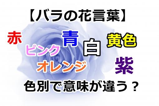 【バラの花言葉】赤、ピンク、青、白、オレンジ、黄色、紫は色別で意味が違う?