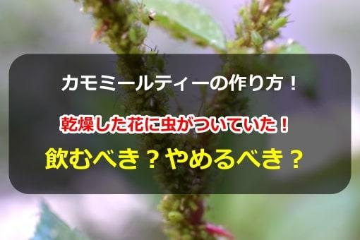 カモミールティーの作り方!乾燥した花に虫がついてた!飲むべき?やめるべき?