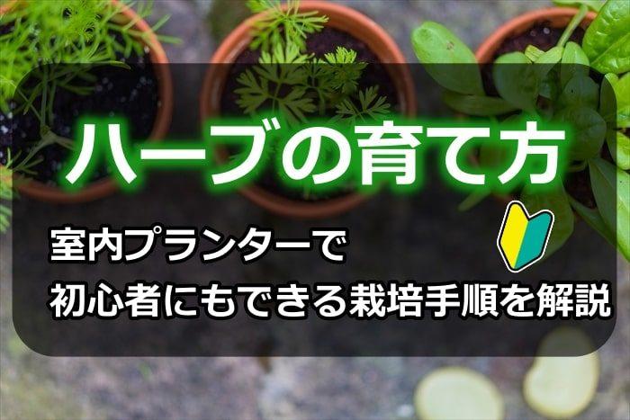 ハーブの育て方!室内プランターで初心者にもできる栽培手順を解説