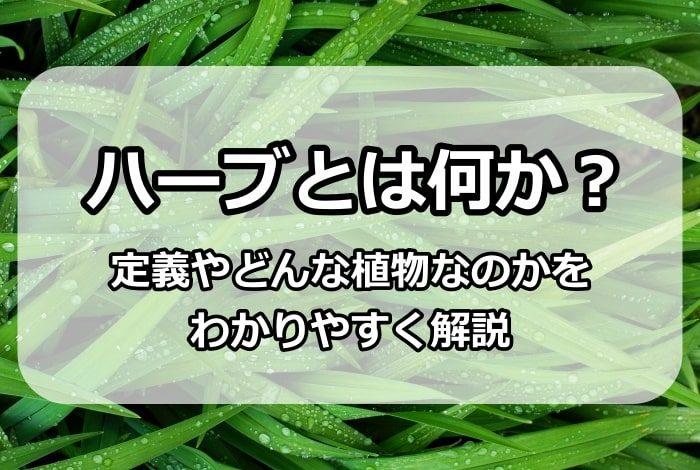 ハーブとは何か?定義やどんな植物なのかをわかりやすく解説