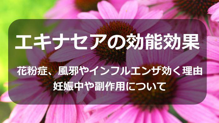 エキナセアの効能効果!花粉症、風邪やインフルエンザに効く理由や妊娠中や副作用について