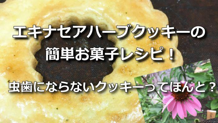 エキナセアハーブクッキーの簡単お菓子レシピ!虫歯にならないクッキーってほんと?